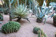 Succulent garden at Jardin Marjorelle