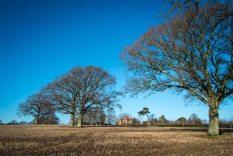 Wisborough Green countryside, Boxing Day