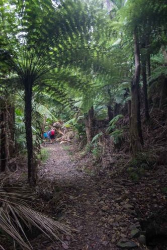 Great Barrier Island-171