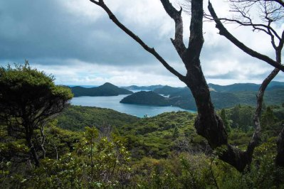 Great Barrier Island-2