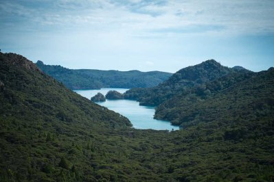 Great Barrier Island-31-2