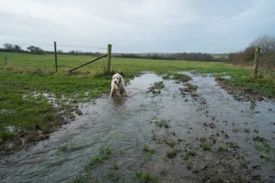 Milly in the mud