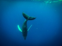 Whales-0078