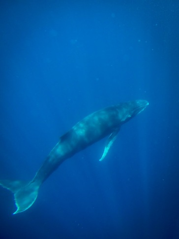 Whales-0118