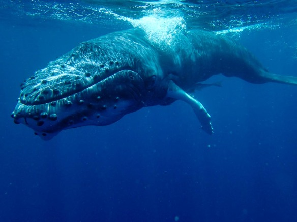 Whales-090190