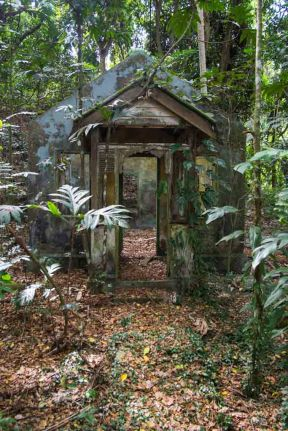 A house decaying gently in the jungle