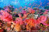 Namena-Soft-Corals-10