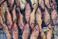 Smoking reef fish