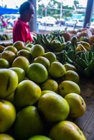 Mangoes just coming into season
