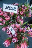 Whangarei market-5580