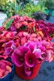 Whangarei market-5583