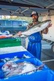 Whangarei market-5586