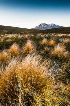 Tongariro Crossing1-4479