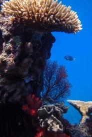 Fiji 2014-180063