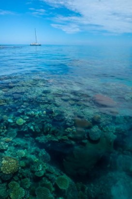 Fiji 2014-6865