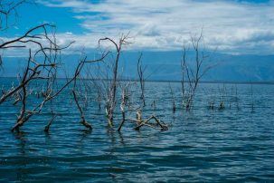 Dead trees protruding from Lago Enriquillo