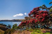 Walking on Waiheke-4439