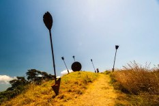 Walking on Waiheke-4907