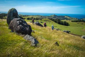 Walking on Waiheke-7778