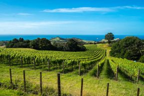 Walking on Waiheke-7780