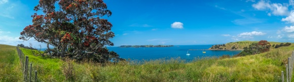 Walking on Waiheke-7810