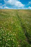 Walking on Waiheke-7813