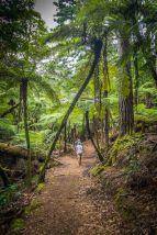 Walking on Waiheke-8274