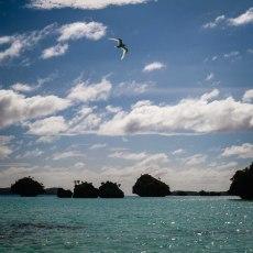Fiji 2015-5195