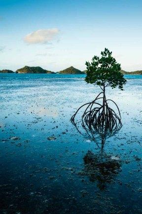 Fiji 2015-6102