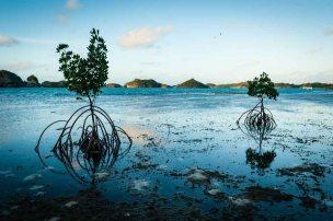Fiji 2015-6103