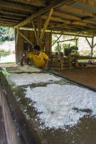 Drying the copra