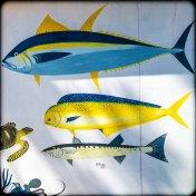 Fiji 2015-01050